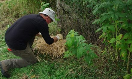 Starting a forest garden and digging a hole