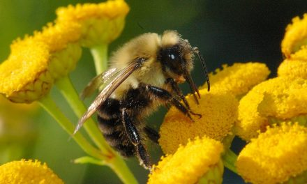 Fungicides are killing bumblebees — new research shocks scientists