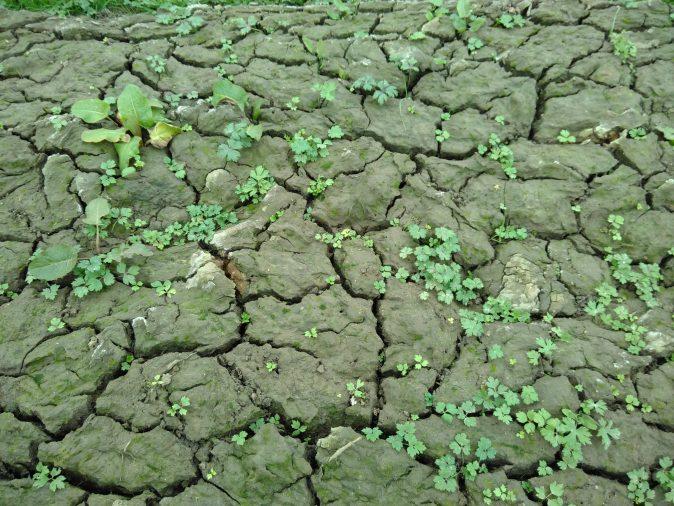 Pioneer plants breaking up the mud