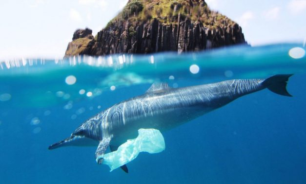 Just 13% of oceans undamaged by human activity